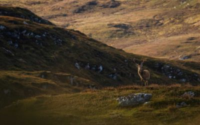 Deer Stalking Scotland Emotional Topic